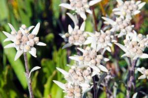 Kirgistan - Kirgistan zum Kennenlernen