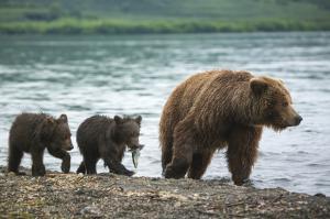 MS AKADEMIK SHOKALSKIY: Ochotskisches Meer
