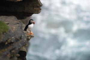 MS SPIRIT OF ENDERBY: Wrangel Island
