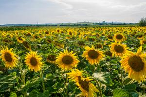 Rumänien  -  das Land der Vielfalt ausführlich erleben