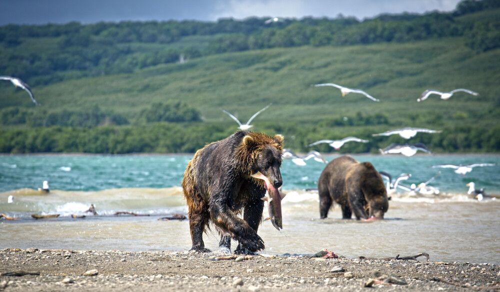 Russland | Kamtschatka - Das Bärenparadies am Kurilensee zu Fuß entdecken