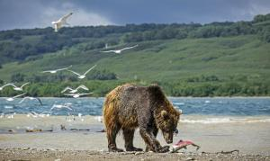 Russland   Kamtschatka - Kronotsky-Biosphärenreservat und Kljutschewskoy-Naturpark im Fokus