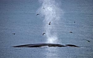 Spitzbergen • Russland - Sagenumwobenes Franz-Josef-Land