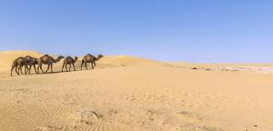 """Turkmenistan - Vom Gesundheitspfad zur """"Höllenpforte"""""""