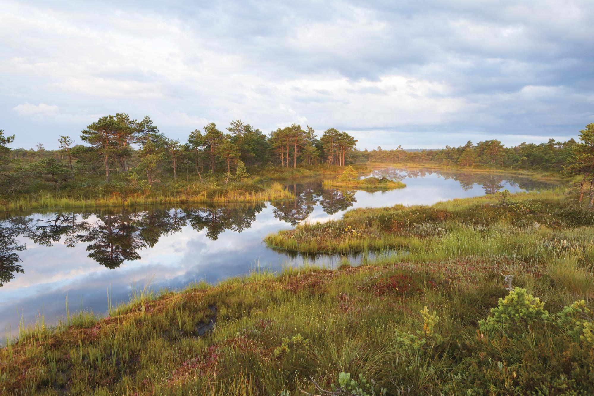 Unberührtes wildes Baltikum