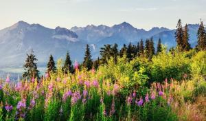 Zakopane, Hohe Tatra und Krakau